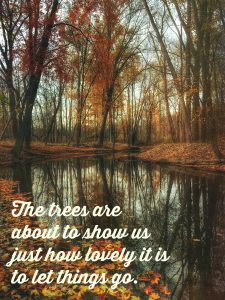 The trees are about to show us just how lovely it is to let things go