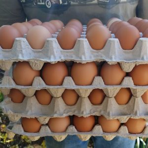 4 flats or 10 dozen farm fresh brown eggs