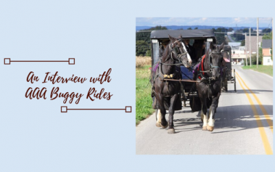 Relax Like You're On Holiday:  AAA Buggy Rides