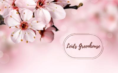 Shop Like a Local:  Leids Greenhouse